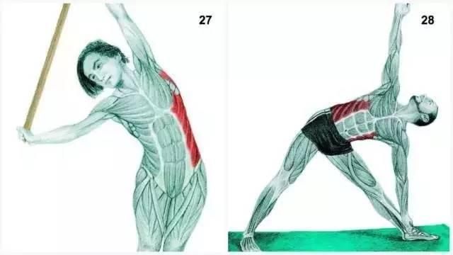 握正確拉筋的方法,讓身材越拉越好!