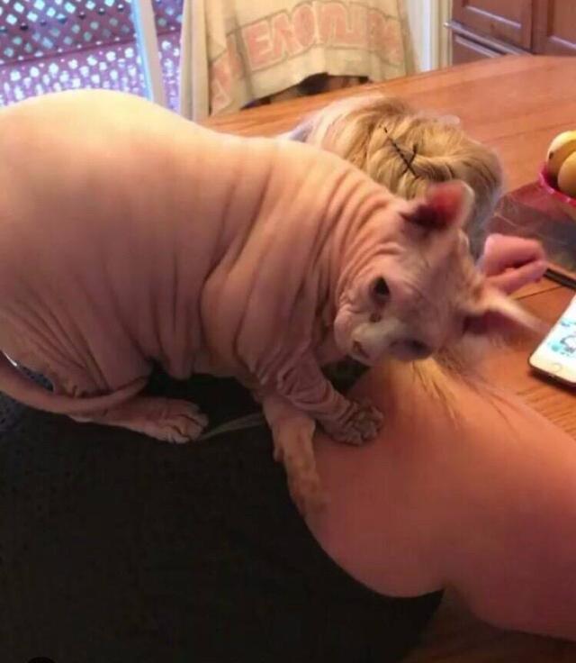 有隻迷你豬趴在朋友背上,它一轉頭我覺得挺尷尬的~