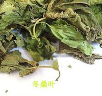 桑葉在那個季節,泡水喝被稱為 「神仙草」?