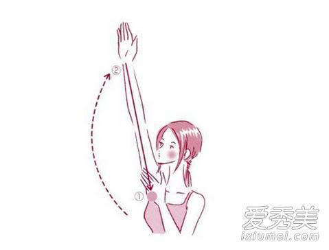 理想的成人女性手臂的粗细应该介於身长 (cm)×0.145~0.