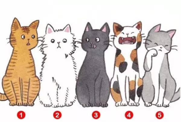 五隻貓選一隻,測出你在別人眼中的印象,超級準!
