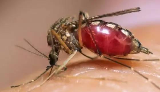 日本專家最新研究:被蚊子叮後不要立刻拍死,不然會更癢更難受