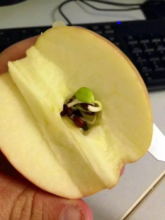 他一切開木瓜就看到「裡面爬滿上千隻蛆蛆」,嚇得想拿去扔,姨母卻驚喜尖叫:「快吃掉,超難得!」