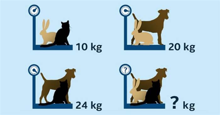 一道超簡單數學題「貓+狗+兔=?公斤」馬上測出你的思考能力怎麼樣!