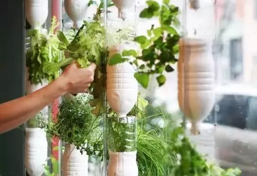 看看老外的方法,家裡沒地種菜的學習一下,以後可以自足了