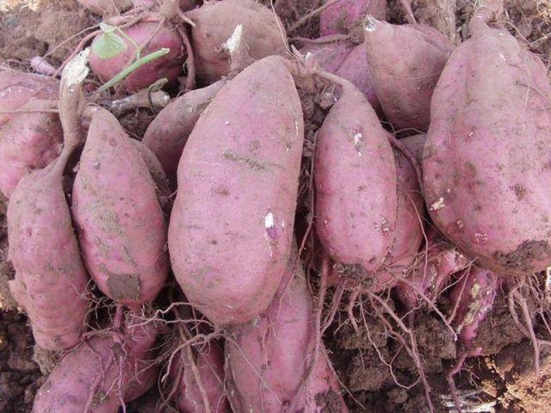 這些有「毒」蔬菜大家要注意了,尿素超標27倍,致癌率非常高