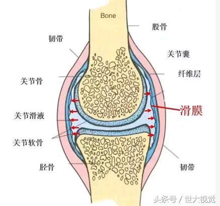 1把絲瓜籽頂10副藥,專治滑膜炎,用一個好一個,膝蓋疼的的存!
