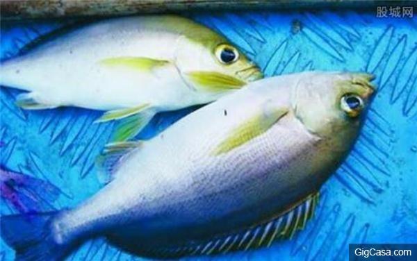 吃了這種魚,一放屁就漏一床的「血」太可怕了!台灣人最容易中招,千萬要學會分辨,要不太危險!