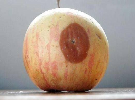 醫生警告:癌細胞最喜歡的3種水果,尤其第一種!