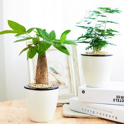 3分鐘自製生根水的5種方法,只用常見材料,比生根粉管用10倍