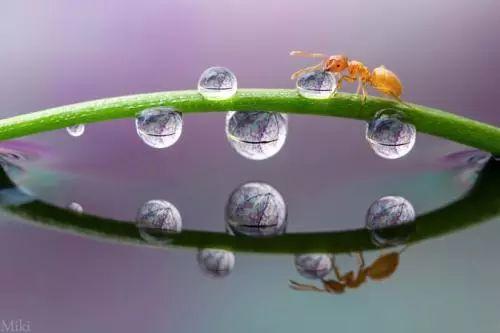 兩隻螞蟻(故事很短很深!)
