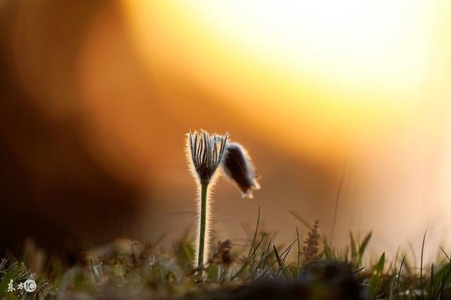 心若計較,處處都有怨言;心若放寬,時時都是春天