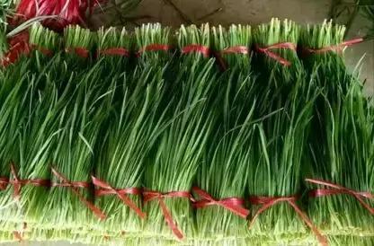 春天多吃韭菜養肝護胃,吃之前該注意啥?