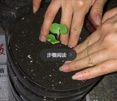 咔咔切一刀,油桶變花盆!順便加點土,青菜吃不完!