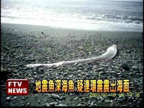 出大事了?台灣南部網友拍攝到的恐怖畫面,所有人都看傻了!沒想到「它」竟然出現在這個地方