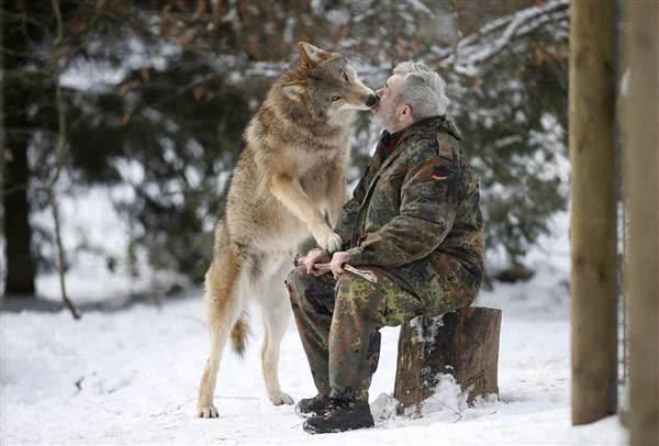 79歲老人成「狼王」,統領狼族40多年,每天吃喝睡都與狼群一起