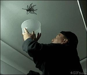 網友在家門口發現這隻「家破人亡尺寸」的蜘蛛後馬上上網求助,沒想到專家卻表示「打死牠你就虧大了」!