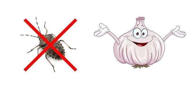 跟昆蟲說掰掰! 10個「實測很有效」的方法 它們再也不敢闖進你家