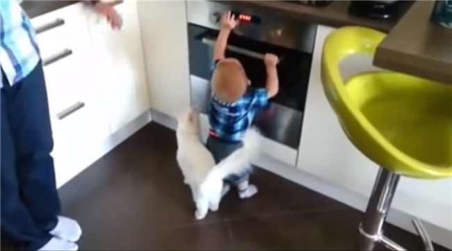 眼看著小寶寶伸手要觸摸熱燙的烤箱...一旁的喵星人竟然做出不可思議的窩心舉動!