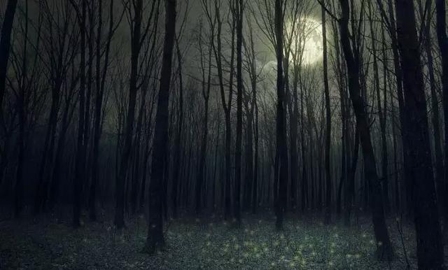 心理測試:4個森林你最害怕哪個?測試你內心最深處的自己是什麼樣