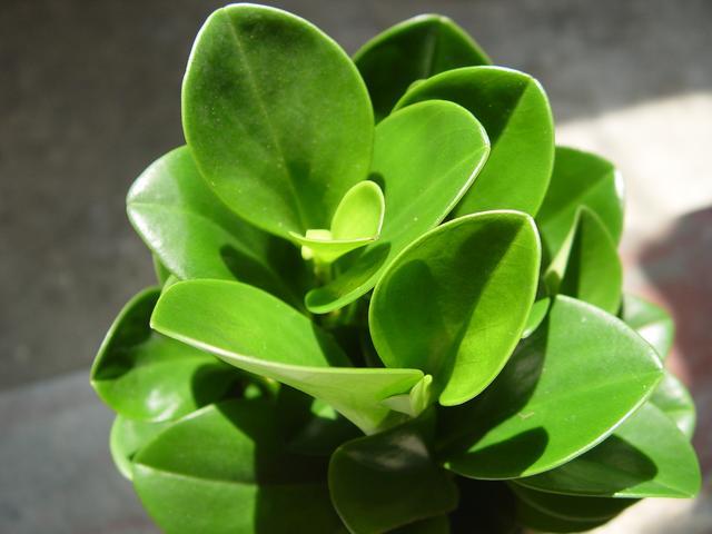 這4種花,清新空氣防輻射,一盆就能搞定!