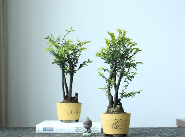 這幾種植物千萬別擺家中,特別第3種富人從不放,否則入住必破財(10/13)