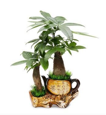 這幾種植物千萬別擺家中,特別第3種富人從不放,否則入住必破財(6/13)