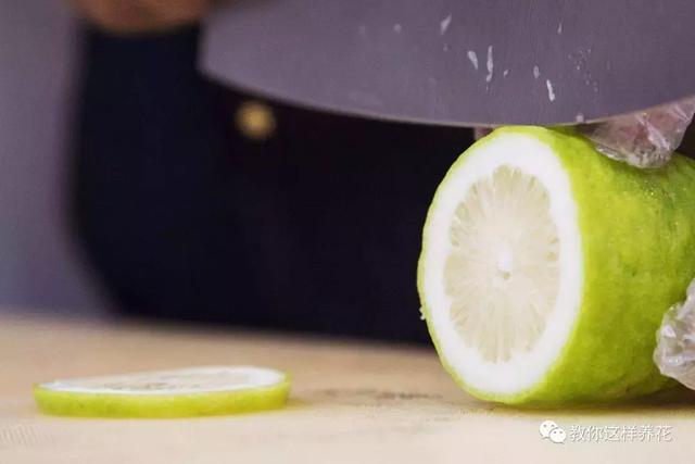 盆栽檸檬,1個小技巧,枝繁葉茂開花多,果子又大又漂亮!
