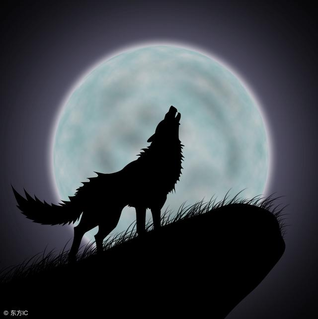狼的信仰,你值得擁有