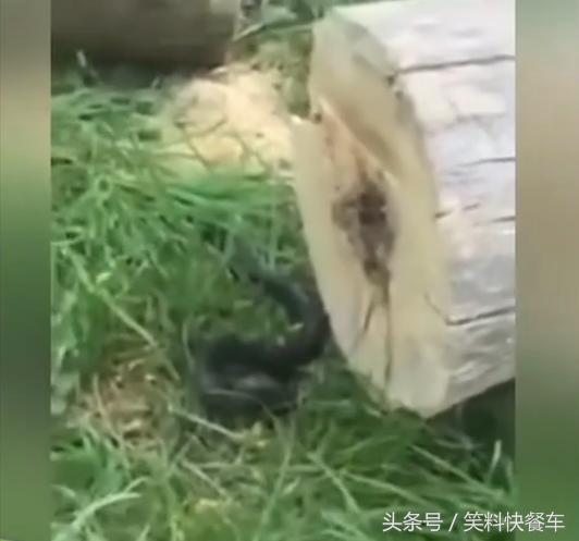 砍樹的工人,被樹心中的怪物嚇出一身冷汗