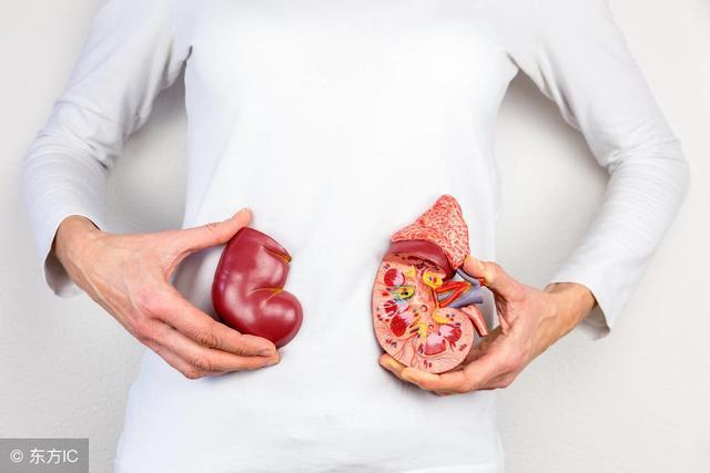 腎結石要多喝水,還是少喝水?醫生說出客觀答案