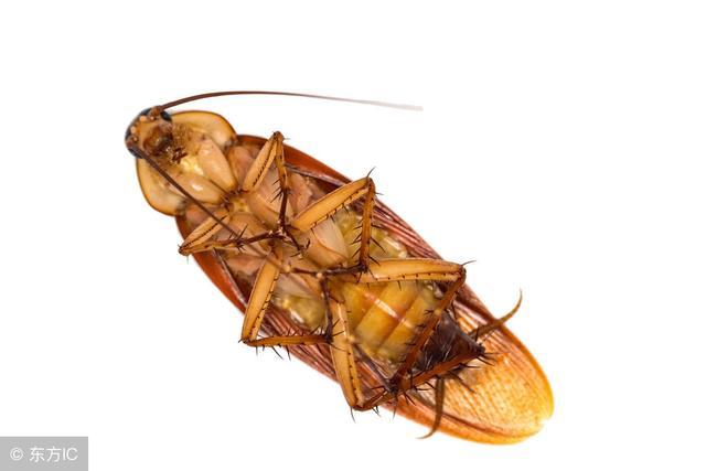 廚房蟑螂太多?教你3個不要錢的「土法子」,把蟑螂「趕盡殺絕」