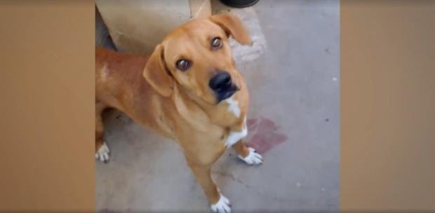 她把全身長滿腫瘤的流浪狗帶回家照顧,兩個月後大家都驚嘆了