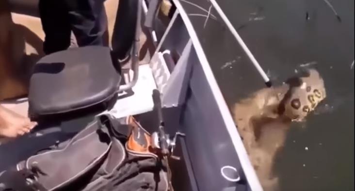蛇攻擊車的刺激場面,1.30秒嚇你一身冷汗,難得一見!