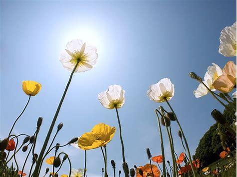 人活的是心情,心若向陽,歲月無恙