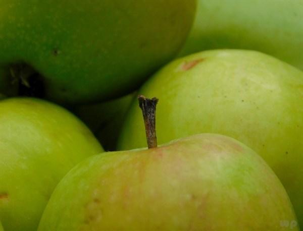 女性晚上吃一個煮蘋果,失眠好了,大肚子也平了,誰吃誰漂亮