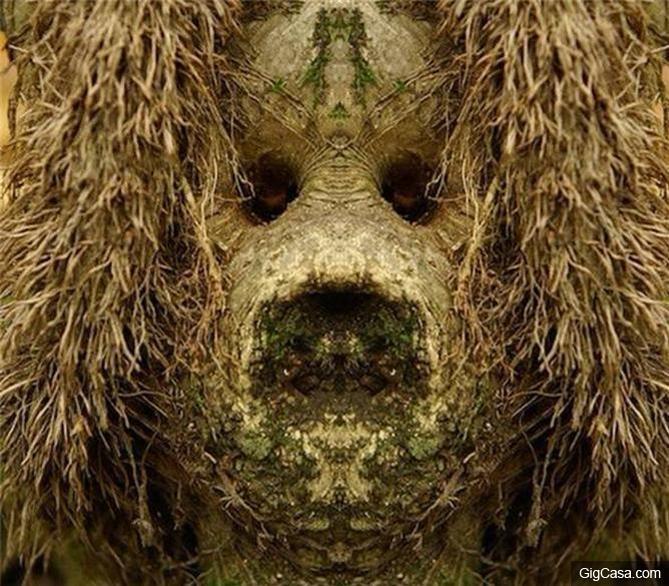 男子爬山發現一片詭異的樹林,走進看到樹上「一雙眼睛盯着自己」,從此變得一發不可收拾……