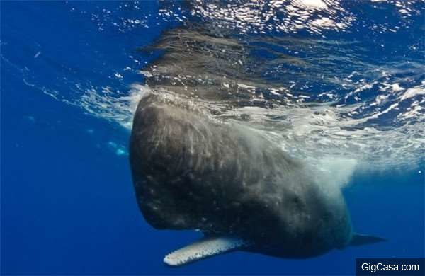 他們在海邊撿到一顆「超級臭」的大石頭,仔細一看才驚覺是千萬寶物!-他在臭水溝裡竟釣到了「比人還要長的巨魚」,沒想到吃完後