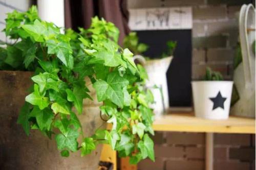此4種花卉適合養「廁所」,殺菌、除臭,愛乾淨的人都會養1盆