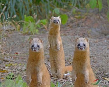 老人收養3個兒子,死後無人送終,出殯那天,一群黃鼠狼擋道