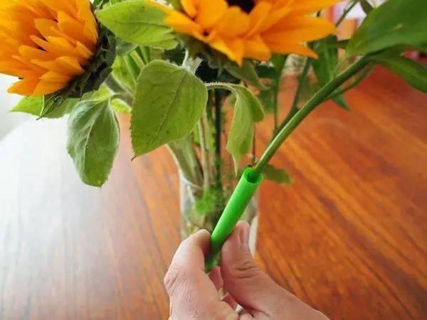 喝完飲料「吸管」不要丟,自從拿去插在花盆裡後,花友都跟著學