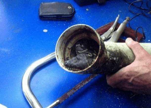 男子廚房下水管堵塞,修理工鋸開時嚇得直接丟掉並報警 !