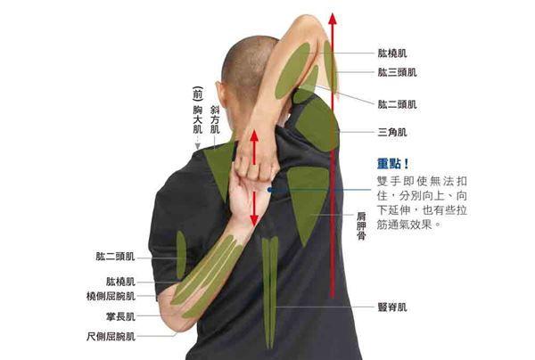痠痛、五十肩、肩頸僵硬常上身?學會3伸展操改善!