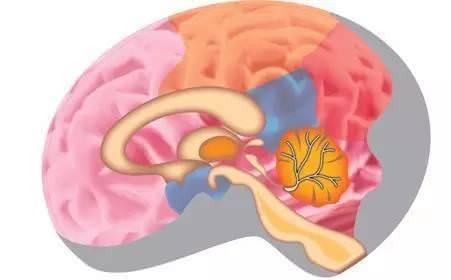 年紀大了記憶力下降,每天早晚活動一次,防止腦衰老、腦萎縮,方法很簡單