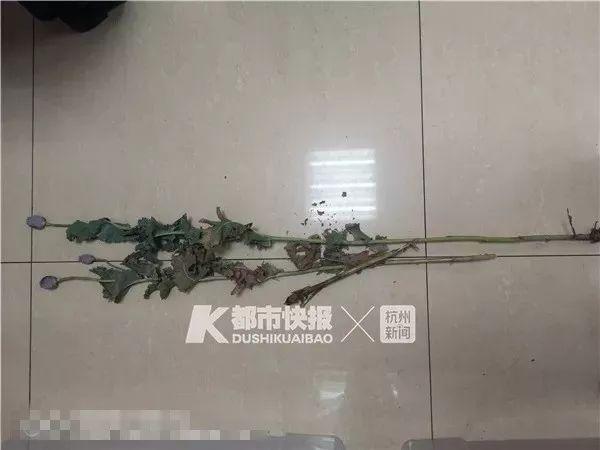 因為陽台上的花被民警盯上,女子大吃一驚:那是婆婆種的!