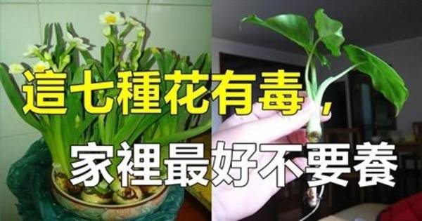 千萬不要將這 7 種花種在家裡,有劇毒!最後一種很多人家都在養哦!