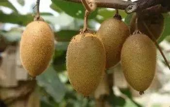 這種水果不能吃!你越愛吃,癌細胞越開心,很多男人把它當零食吃