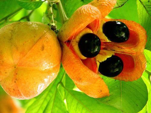 這些「罕見的水果」你吃過幾種?「這種樹」居然長出香腸了,味道還超甜! - 美麗日報 Life