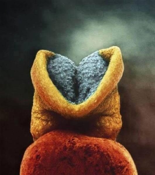 他花12年拍下「寶寶在子宮發育過程」震撼人心,16週「胎兒小手...」萌得讓人融化!