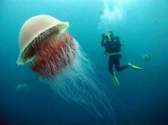 日本漁民海邊發現大量奇怪屍體,專家檢驗後立即送去銷毀